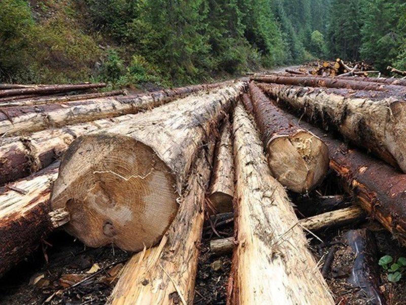Выявлена контрабанда лесоматериалов
